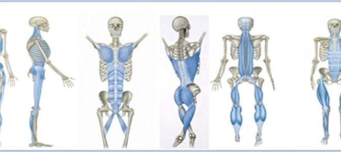 Evidencia de la existencia de 6 meridianos miofasciales propuestos por Myers basados en estudios de disección anatómica.